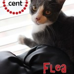 How to Get Rid of Fleas on Cats the Natural Way