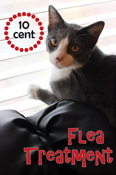 Flea remedies for cats and dogs don't have to be toxic! How to Get Rid of Fleas on Cats the Natural Way