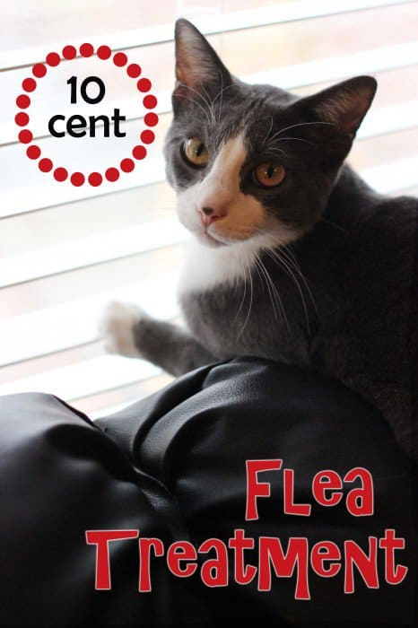 Essential Oils for Fleas on Cats and Dogs: DIY Essential Oil