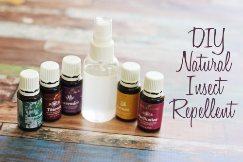 diy natural insect repellent. Make your own essential oil bug spray with these essential oils for mosquitoes #youngliving #essentialoils #oilyfamilies