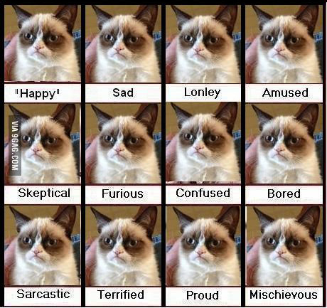 Just replace Grumpy Cat's face with Hubs' and that pretty much sums him up.