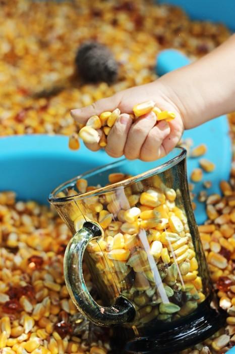 fall sensory bin corn