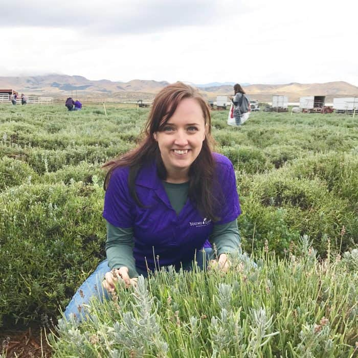young living essential oils lavender farm mona utah