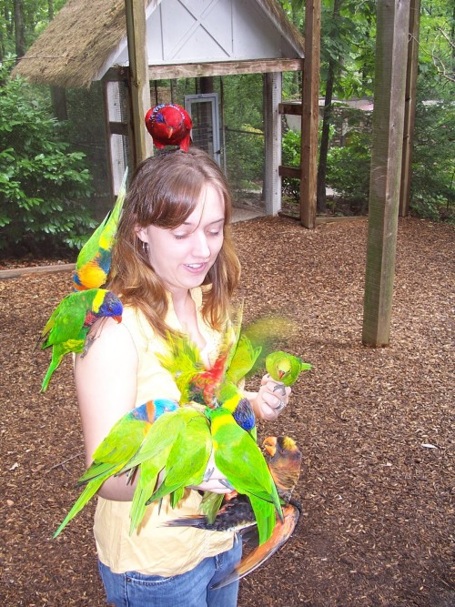 parrot mountain things to do in pigeon forge