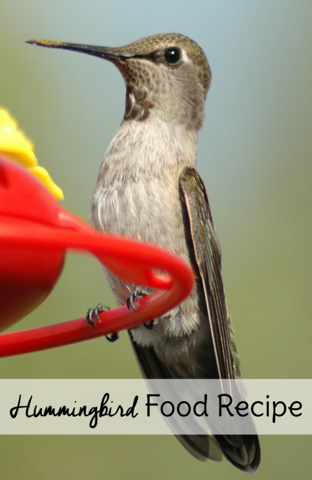 Recipe Hummingbird Food With Essential Oils
