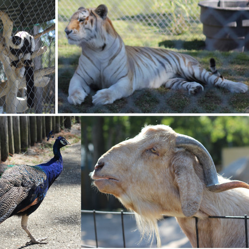 Things to do in Gulf Shores Alabama: Gulf Shores Zoo