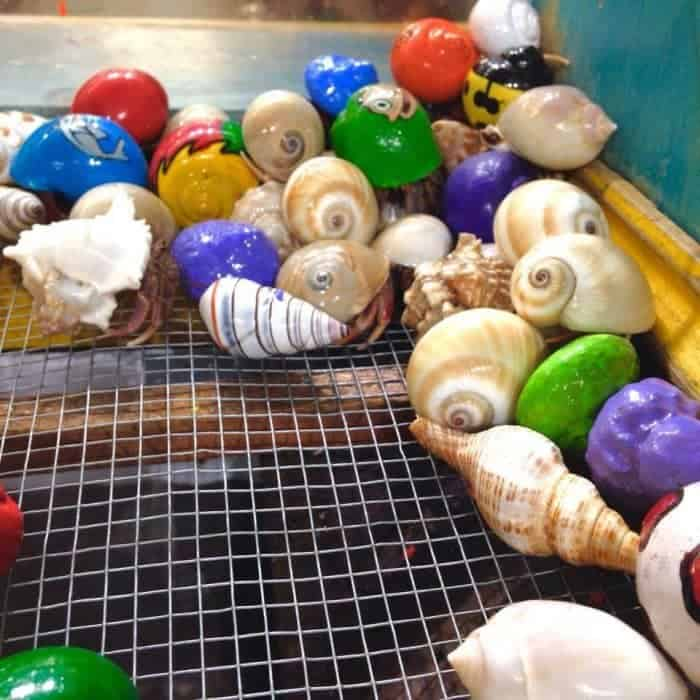 Taking Gulf Shores Alabama vacation with kids? Here are a few things to do in Gulf Shores with kids. You won't want to miss the sea turtles hatching!