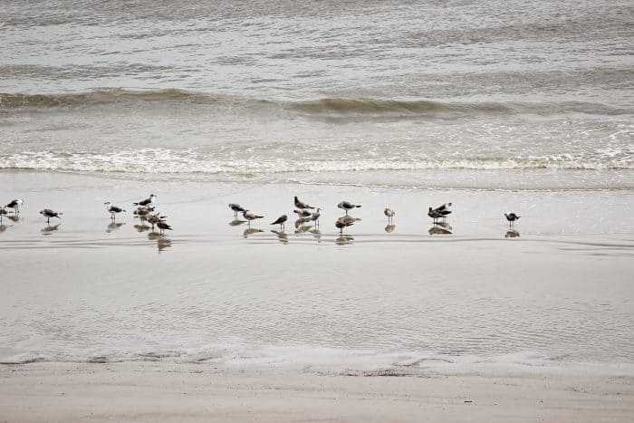 Travel tips when visiting Hilton Head Island, South Carolina as a family vacation destination