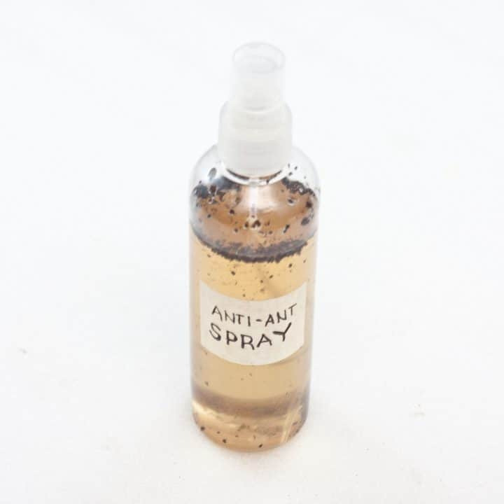 bottle of natural ant killer ready to shake and use
