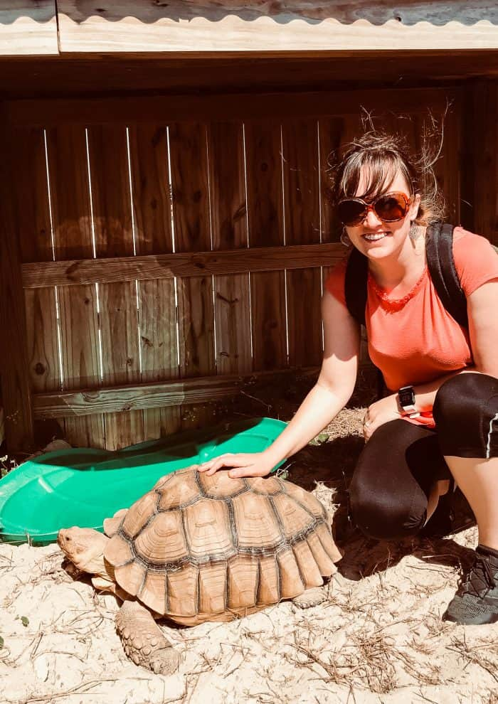 woman petting a tortoise